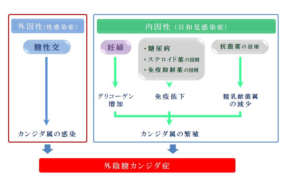 カンジダ発症過程 2019,8,9