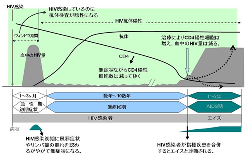 HIV(CD4陽性Tリンパ球推移)